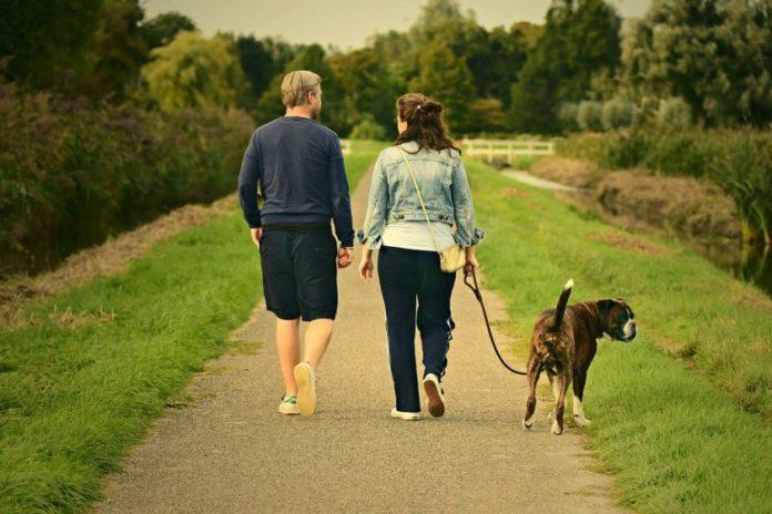 Прогулка на свежем воздухе с собакой