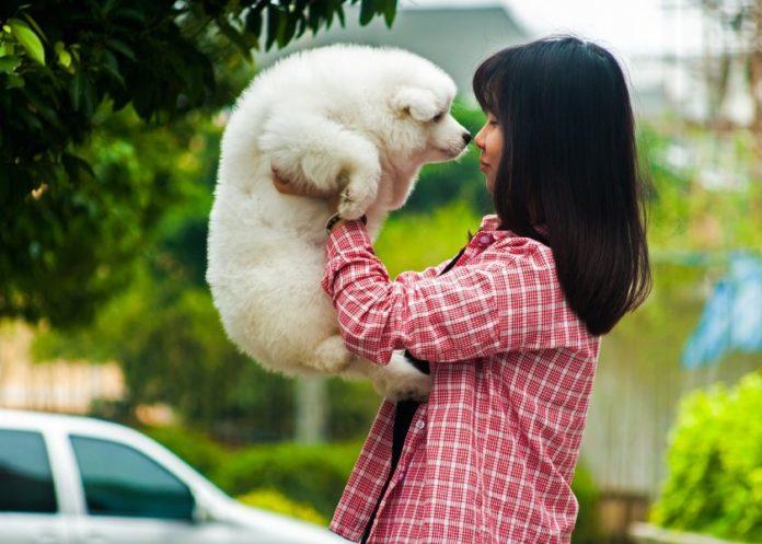 Терапия с помощью собаки называется –канистерапия