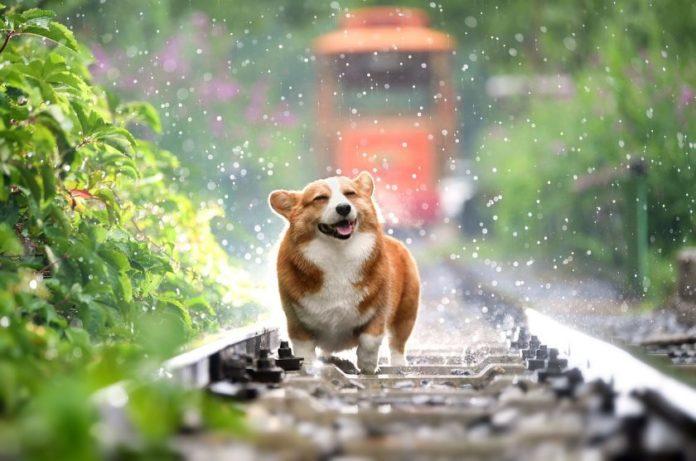Собака — друг человека