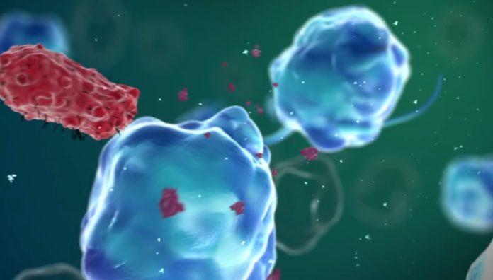 Ягоды годжи улучшают иммунитет